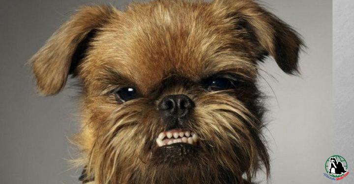 7 coisas que fazemos com os nossos cachorrinhos que eles nãogostam