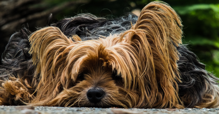 ração para cães