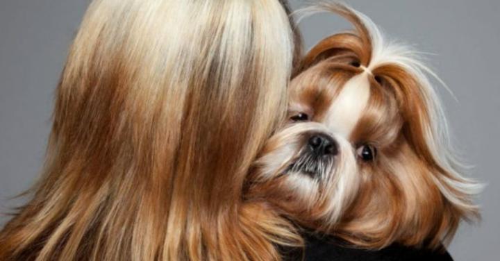 Cachorros refletem a personalidade de seusdonos