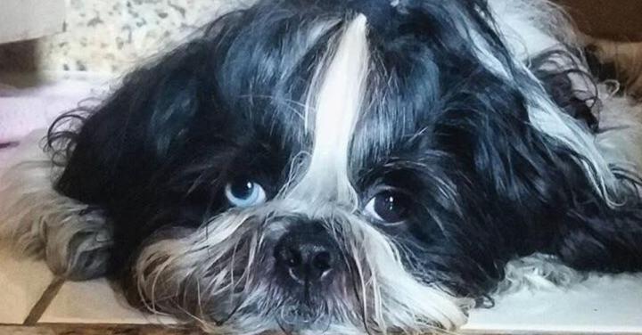 Como lidar com um cachorromedroso?