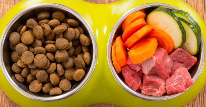 Ração ou alimentação caseira? Qual émelhor